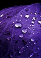 Purple rain shower by Baepfelchen