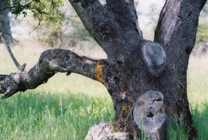 Face in the tree by causeIcanBtch