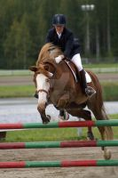 Finnhorse-style show jumping by suvinen