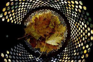 Trashbin Leaves by Frige