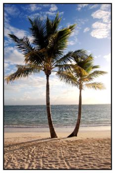 Dominican Republic: Palm2 by orchiko