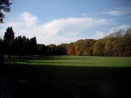 Autumn treeline and field by Stacey1mb