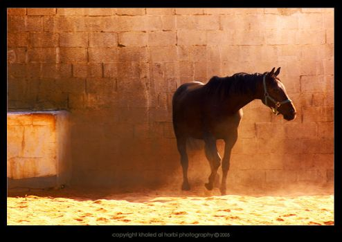 Horse by itash