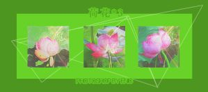 0911 Lotus by shilohremy