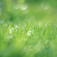 greens by tsigane