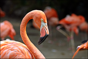 Pink Feathers by 1Elevin1