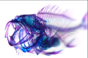 Unreal-fish by sarahpoinciana