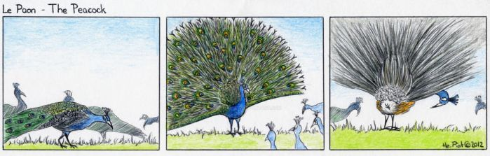 The Peacock by HelenePiet