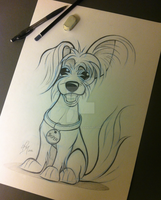 Dog Caricature Silky Terrier X Maltese by timmcfarlin