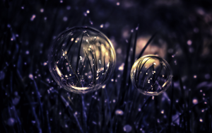 Morning Dew by Nushulica