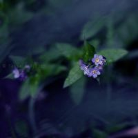 mood indigo by tjasa