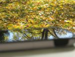 Reflected Leaves by wintercool612