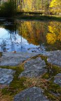 Beaver Pond by mirengraphics