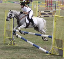 STOCK Showjumping 458 by aussiegal7