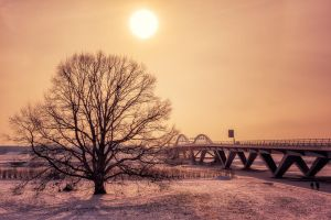 Winter Sun by hessbeck-fotografix