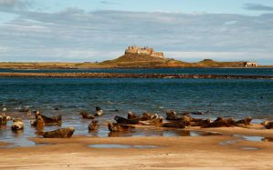 Holy Island Seals by scotto