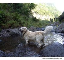 it's hot today.. by goldenretrieverfans