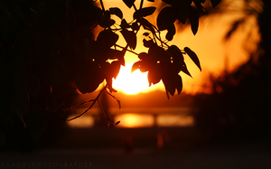 Sun between trees by SANDYFOTOGRAFIA