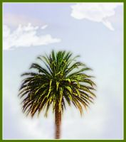 Palm Tree Manip by webgoddess