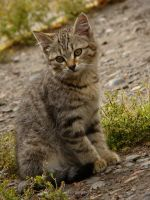 Little kitten by Panka2009