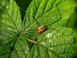 Harvestman enjoys the sunny day :) by TheFunnySpider