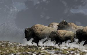 Bison Stampede by deskridge