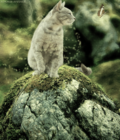 Magic of the Cat -- Charity Image by BV-Academy