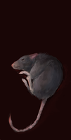 Ratte by goatprince
