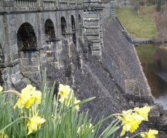 Dam and Daffs by UncleGargy