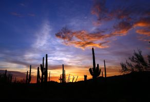 Sonora Desert Sunset  2915 by mammothhunter
