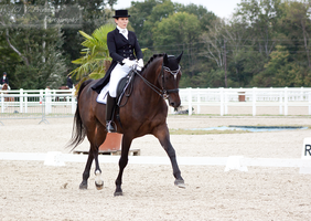 Dressage Cup_17 by CalyHoney