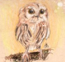 cute OWL (a request from my teacher) by sackofsquan