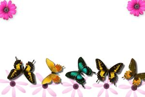 pretty flowers and butterflys by jackiesc