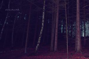 Into the forest. by MauiMelle