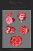 Roses 9 Png By Starscoldnight by StarsColdNight