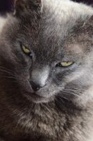 close-up cat by MarieLoup