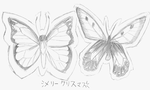 I drew'd chew sum Butterflies by TOXiC-ToOtHpAsTe