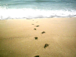 footprints by Sombolia