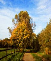 Country Path by SolStock