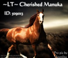 LT Cherished Manuka by MoonliteHoofbeats