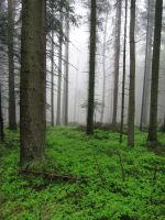 of fog and green by w-p