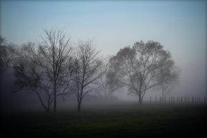 Misty Morning 2 by kalika31