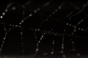 The Web by Kaddastrophic