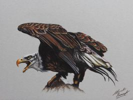 Eagle DRAWING by Marcello Barenghi by marcellobarenghi