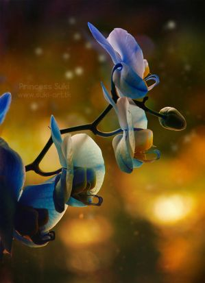 Blue Orchid by Princess-Suki-W