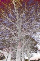 Fairy tales trees by Patterns-stock