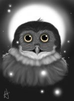 Owl in the moonlight (Revised) by Katsunogi