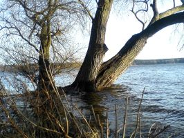 Trees in High Water STOCK IV by ChaosStocks