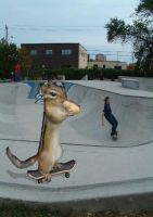 skate nuts by ryanlockley