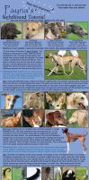 Payna's Sighthound Tutorial 2 by basi